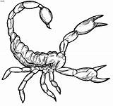 Scorpion Coloring Sheet Printable Pages Animal sketch template