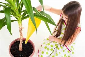 Yucca Palme Pflege : die yucca palme robuste zimmerpflanze bringt gr n ins haus wohnungs ~ Eleganceandgraceweddings.com Haus und Dekorationen
