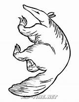 Aardvark Coloring Pages Printable Printables Animals sketch template