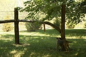 beautiful rustic dog fence With attractive dog fence