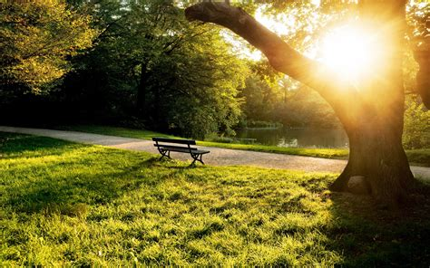 배경 화면 공원 벤치, 나무, 풀, 햇빛에 여름 아침 1920x1200 Hd 그림, 이미지