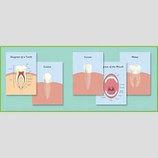 Teeth Posters  Dentist Role Play  Free Early Years & Primary Teaching Resources (eyfs & Ks1