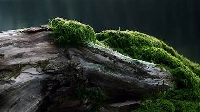Moss Forest Nature Wood Trees Wallpapers Log