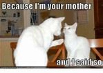Funny Grumpy Cat Memes of 2017 on SIZZLE | Cat Memes