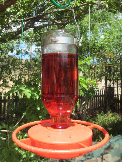 feeding hummingbirds the dangers of red dye sheri l