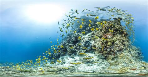 Interactive Coral Reef Panoramas Will Make You Hate Your Landlubbing Life | WIRED