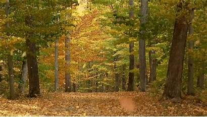 Autumn Windy Forest Imgur Gifs Fall Falling