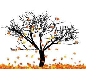 backdrops beautiful autumn maple tree in its falling leaves stock