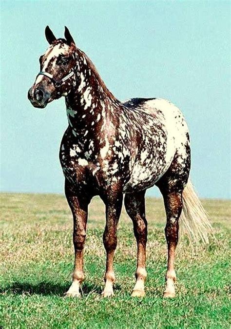 horse smartest breeds horses most dog