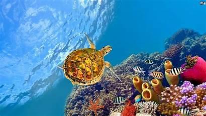 Aquatic Wallpapers Underwater Sea Places Chrysaora