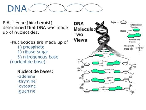 dna structure and replication worksheet free worksheets