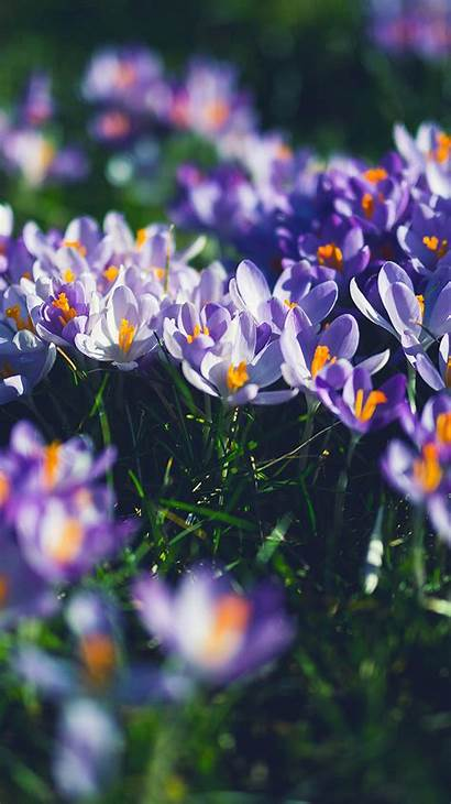 Iphone Purple Spring Flower Nature Wallpapers Apple