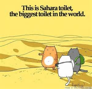 toilet cat this is toilet the toilet in the world cats