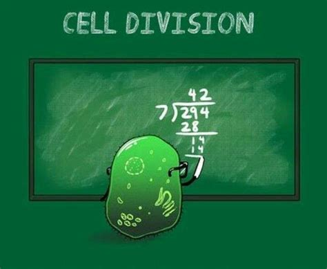 Cell Memes - cell division memes grade calculator