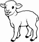 Lamb Sheep Coloring Pages Drawing Born Laughing Colouring Bighorn Sheet Printable Getcolorings Coloringsky Getdrawings Everfreecoloring sketch template