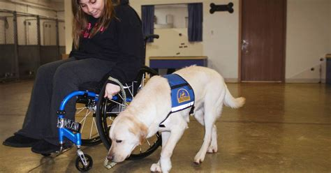 service dogs  people  wheelchairs navigate winter