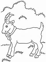 Goat Coloring Pages Goats Billy Three Gruff Printable Cute Mountain Baby Preschool Animal Printables Drawing Farm Outline Procoloring Colouring Animals sketch template