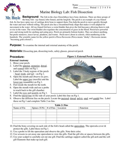 perch dissection worksheet free worksheet printables