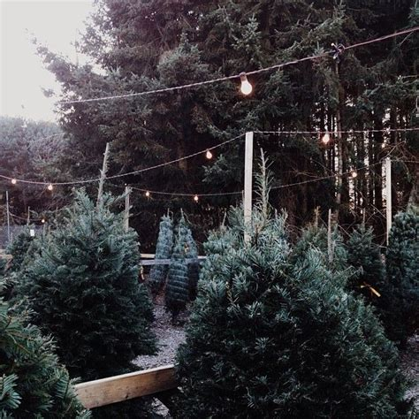best seattle tree lot 17 best images about tree lot on trees snow and the