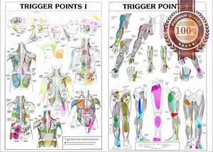 Details About New Trigger Points 1  U0026 2 Anatomical Diagram