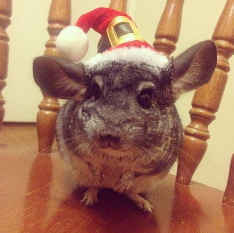 Big or small, there's holiday spirit for all at PetSmart ...