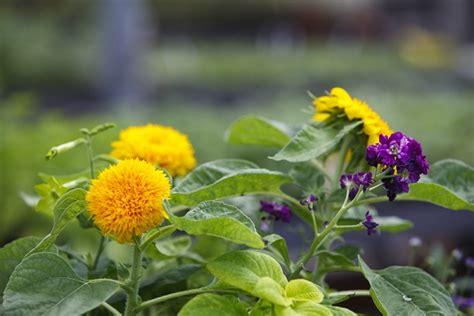 fiori di settembre per bouquet bouquet da sposa di settembre con fiori di co