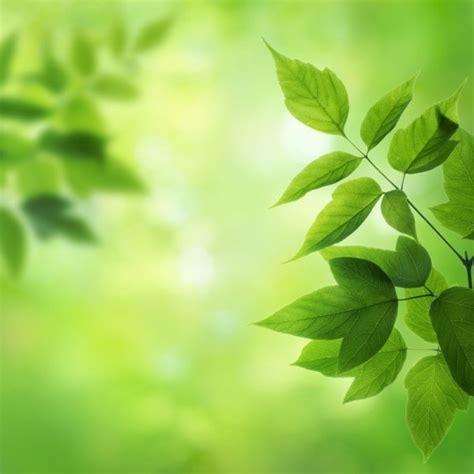 leaf background  stock