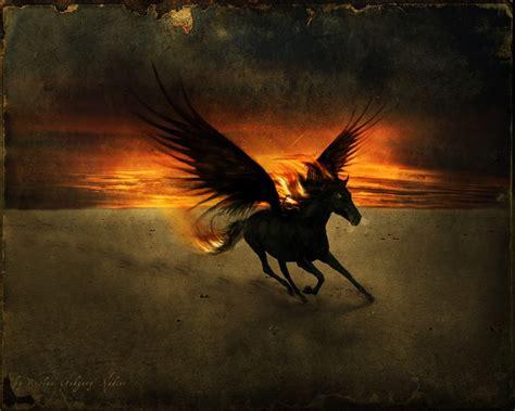 fantasy animals images  black pegasus hd wallpaper