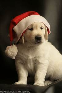 Cute and funny pictures of animals 56 .Christmas 8.