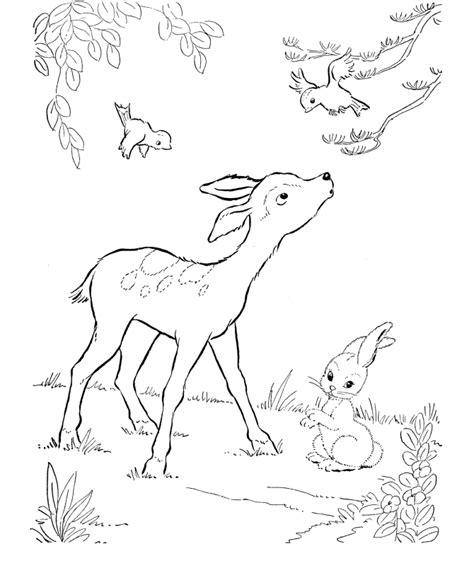 deer coloring pages kidsuki