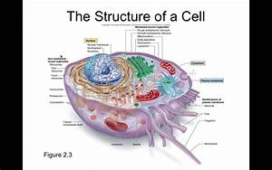 Chapter 2 The Cell
