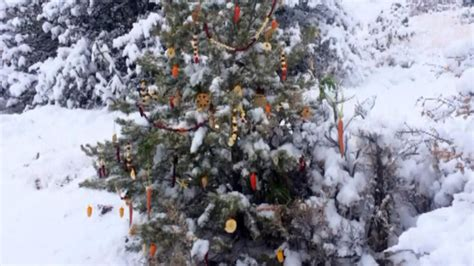 denver residents can recycle christmas trees for free