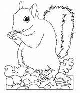 Squirrel Coloring Printable Squirrels Animal Getdrawings Rescue Wild Popular Coloringhome sketch template