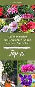 Blumen Für Südbalkon : 10 pflegeleichte balkonpflanzen f r die sonne balkon ~ Watch28wear.com Haus und Dekorationen
