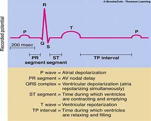 Physiology 441  U0026gt  Paternastro  U0026gt  Flashcards  U0026gt  Chapter 9