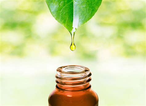 How To Treat Acne With Tea Tree Oil  The Nature's Farmacy