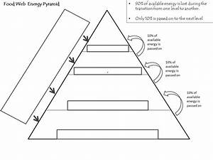 hand out a blank energy pyramid | BetterLesson