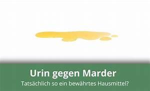 Hausmittel Gegen Mäuse Und Ratten : urin gegen marder als hausmittel geeignet alles ~ Michelbontemps.com Haus und Dekorationen