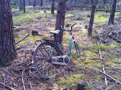 Træ, Natur, Skov, Sti, Gammel, Mos