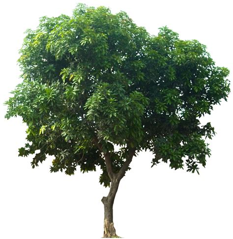 9 stocks to plant your dividend growth tree retire29