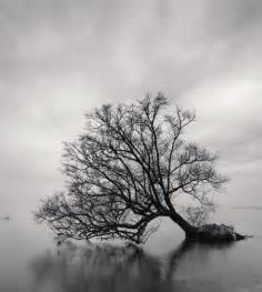 Michael Kenna Photography Tree