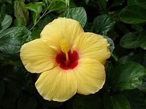 Tropical flowers wallpaper