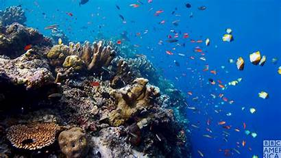 Reef Oceans Barrier Bbc Belize America Giphy