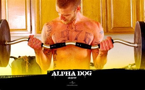 alpha dog images alpha dog hd wallpaper  background