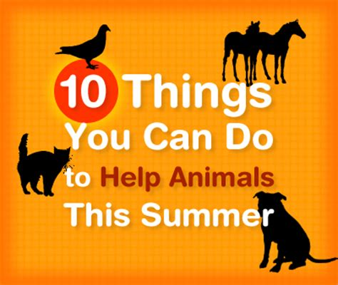 how animals help help animals this summer all animals matter