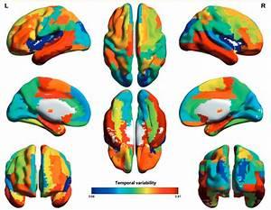 Study Reveals New Measure Of Intelligence Involving