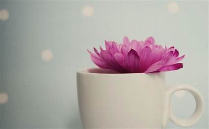 Pretty Backgrounds Pink Wallpapers Desktop Background Samsung