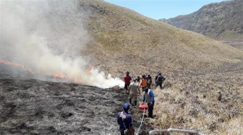 sabana gunung bromo kebakaran tempat wisata sempat ditutup
