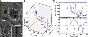 Cellular Uptake And Dynamics Of Unlabeled Freestanding Silicon Nanowires
