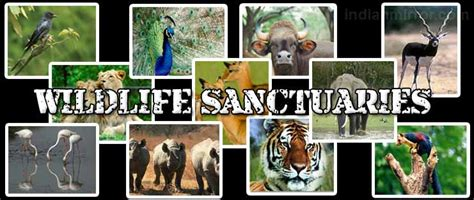 Difference Between Wildlife Sanctuary, Biosphere Reserves